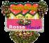 Bunga Papan Wedding 17- desain khusus