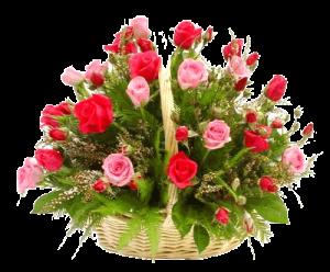roses in basket 003