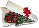 roses in box 004